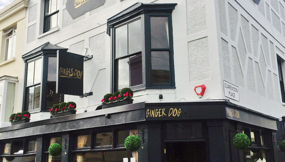 The Ginger Dog - Gallery