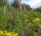 Lower Allercombe Farm - Gallery - picture