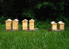 The Apiary