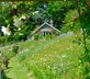The Cottage in the Garden - gallery - picture