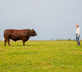 The Sussex Ox - Gallery - picture