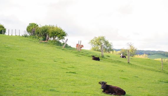 Huntlands Farm - gallery