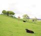 Huntlands Farm - gallery - picture
