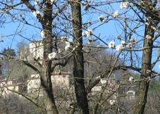 Villa Simonicchi