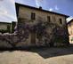 Bichi Borghesi Scorgiano - gallery - picture